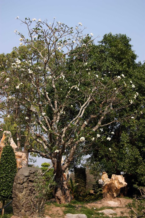 Thailand-Pattaya-Million Year Stone Park-2012-Изображение 308 (466x700, 151Kb)