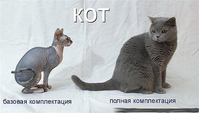 кот (640x363, 36Kb)