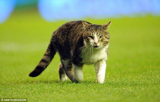 Cat (1) (634x404, 40Kb)