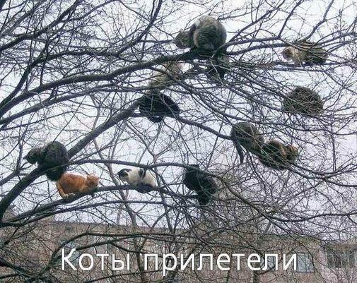 00 прикольные коты (505x401, 90Kb)