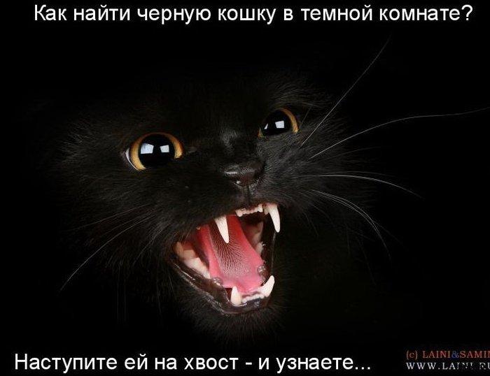 10 кошки приколы 10 (700x538, 43Kb)
