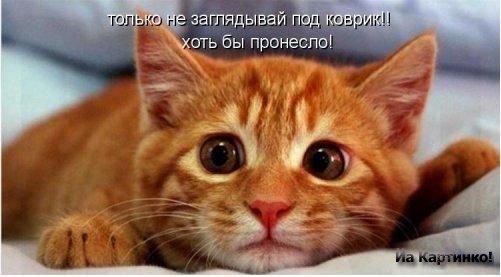 коты приколы 20 (501x277, 30Kb)