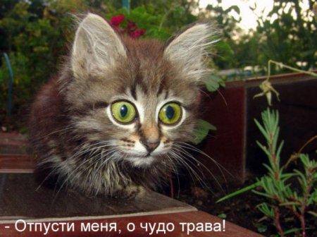 коты приколы 30 (450x336, 36Kb)