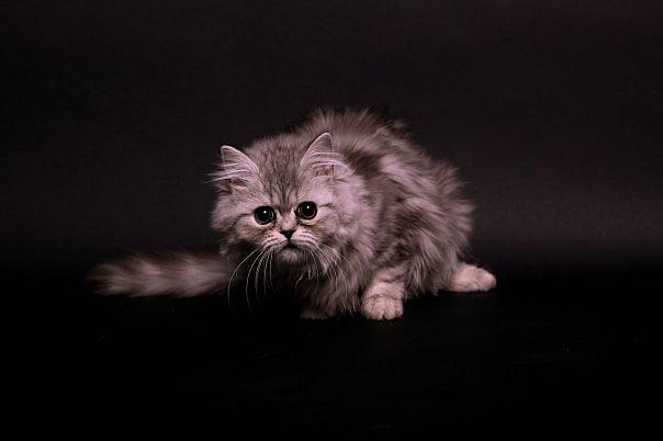 прикольные коты 38 (604x402, 27Kb)