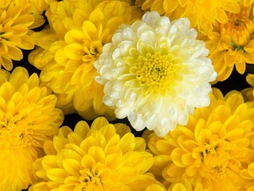 Весенне-летний цветной позитив!