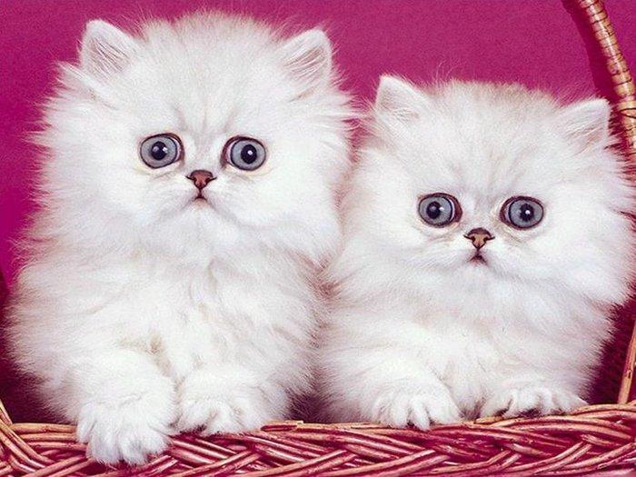 Cats-cats-7017644-800-600 (700x525, 79Kb)