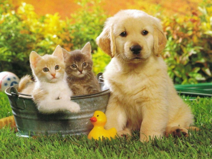 Cats-cats-6927884-1024-768 (700x525, 100Kb)