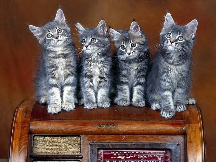 Cats-cats-6927890-1024-768 (700x525, 122Kb)