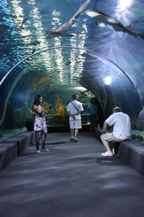 Thailand-Bangkok-2012-Изображение 507 (466x700, 116Kb)