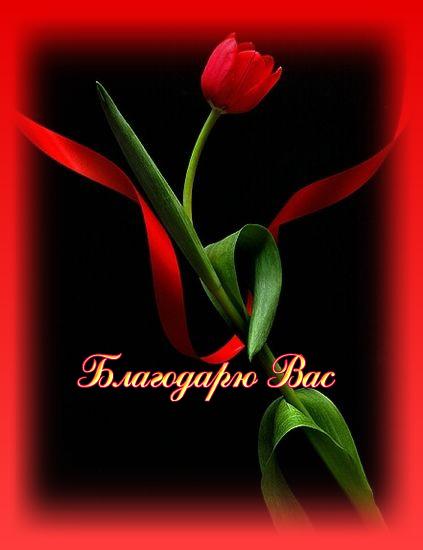 Благодарю вас Тюльпан (423x550, 115Kb)