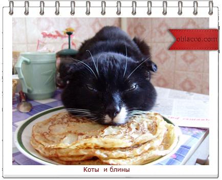 коты и блины/3518263_lini (434x352, 251Kb)
