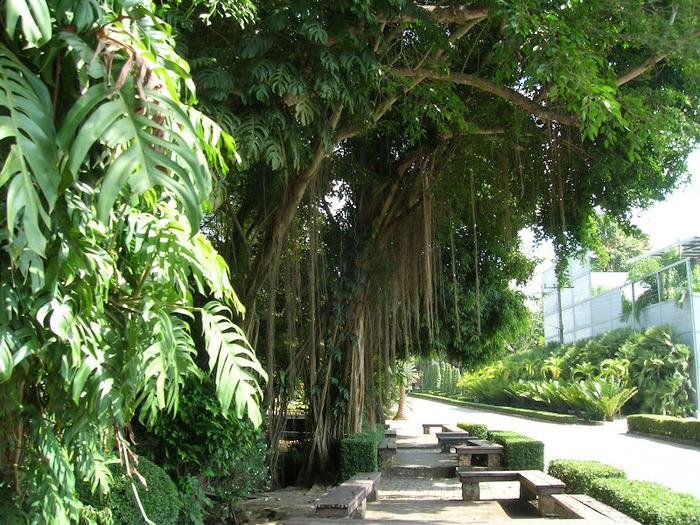 Парк Нонг Нуч (Nong Nooch Tropical Garden) 46628
