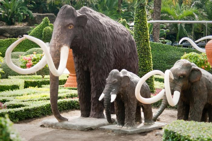 Парк Нонг Нуч (Nong Nooch Tropical Garden) 57438