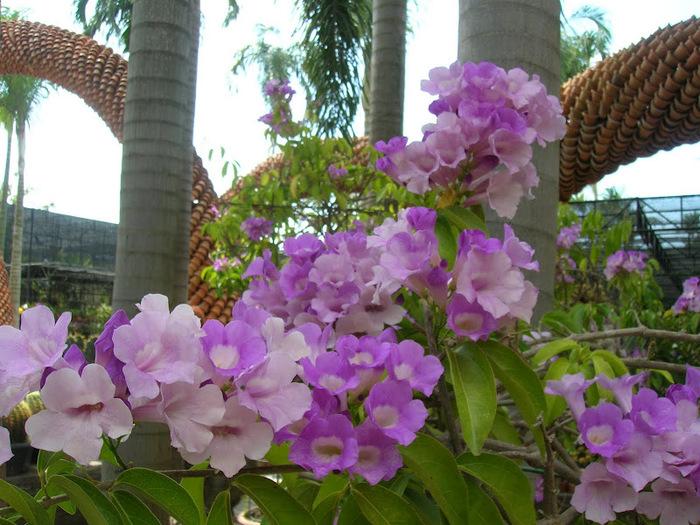 Парк Нонг Нуч (Nong Nooch Tropical Garden) 23132