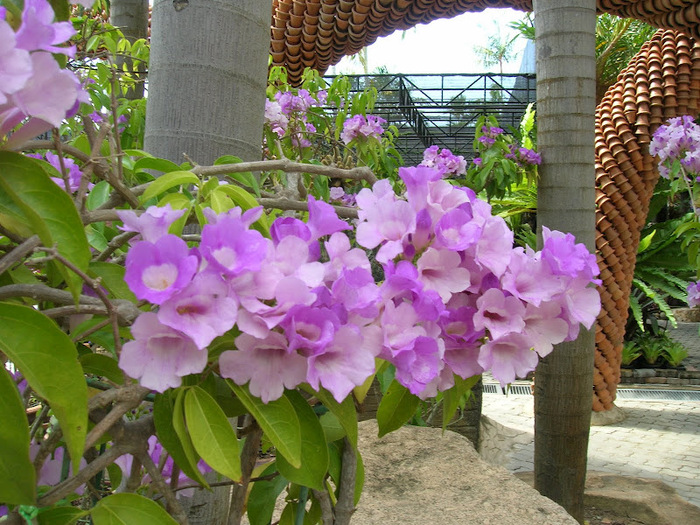 Парк Нонг Нуч (Nong Nooch Tropical Garden) 85468