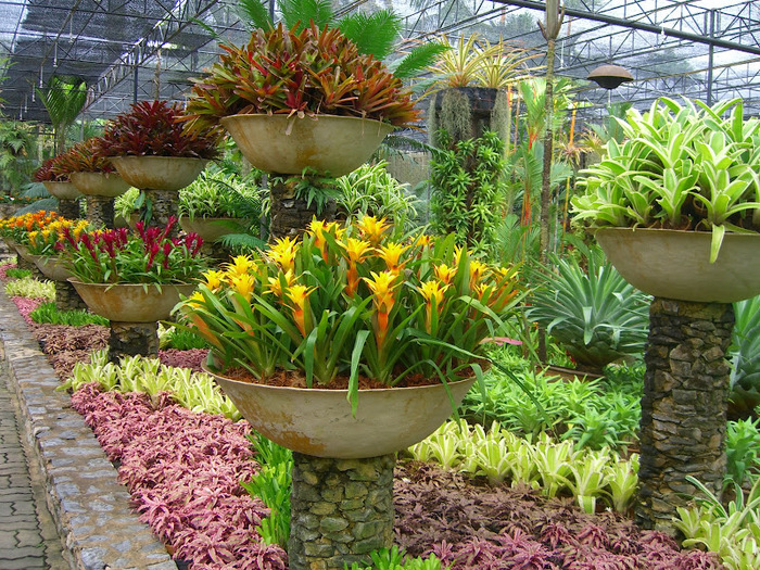 Парк Нонг Нуч (Nong Nooch Tropical Garden) 56210