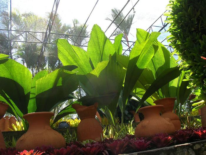 Парк Нонг Нуч (Nong Nooch Tropical Garden) 61205