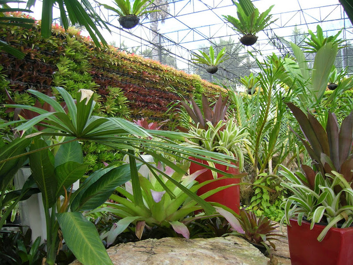 Парк Нонг Нуч (Nong Nooch Tropical Garden) 36245