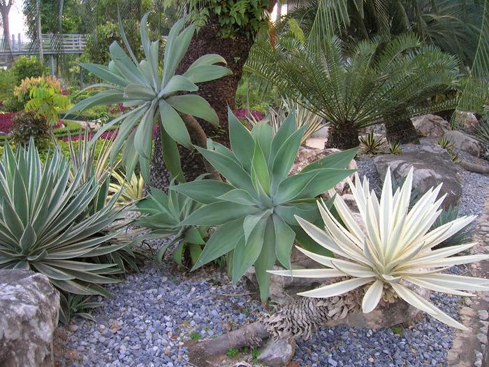 Парк Нонг Нуч (Nong Nooch Tropical Garden) 71814