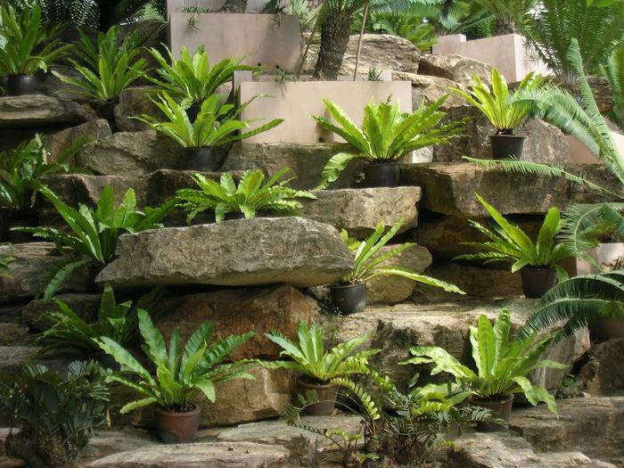 Парк Нонг Нуч (Nong Nooch Tropical Garden) 15284