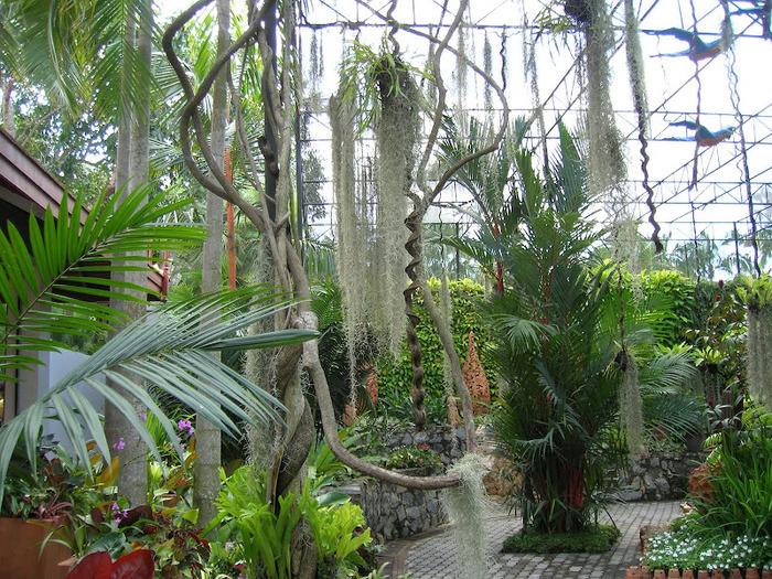 Парк Нонг Нуч (Nong Nooch Tropical Garden) 27282