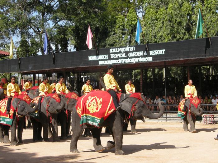Парк Нонг Нуч (Nong Nooch Tropical Garden) 12168