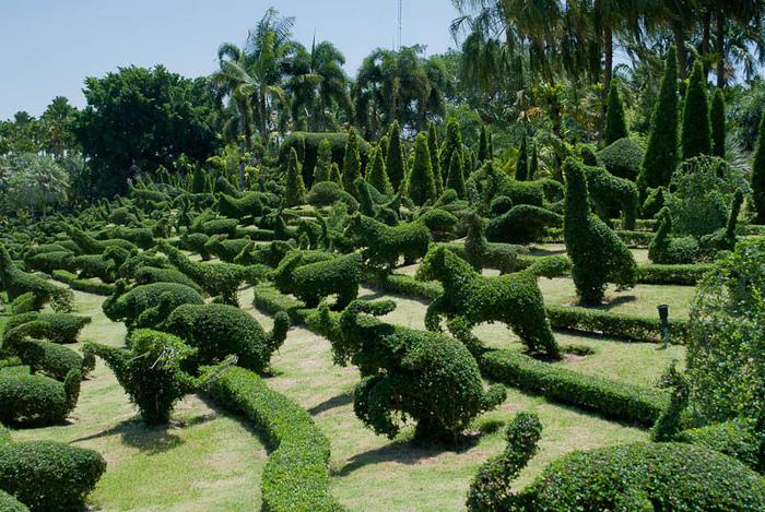 Парк Нонг Нуч (Nong Nooch Tropical Garden) 55567
