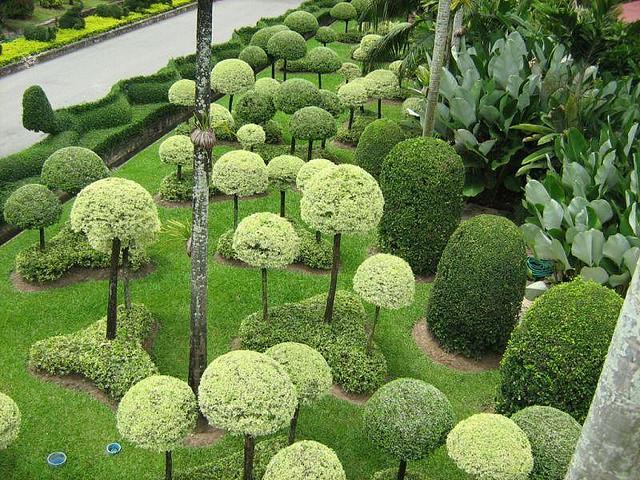 Парк Нонг Нуч (Nong Nooch Tropical Garden) 52440