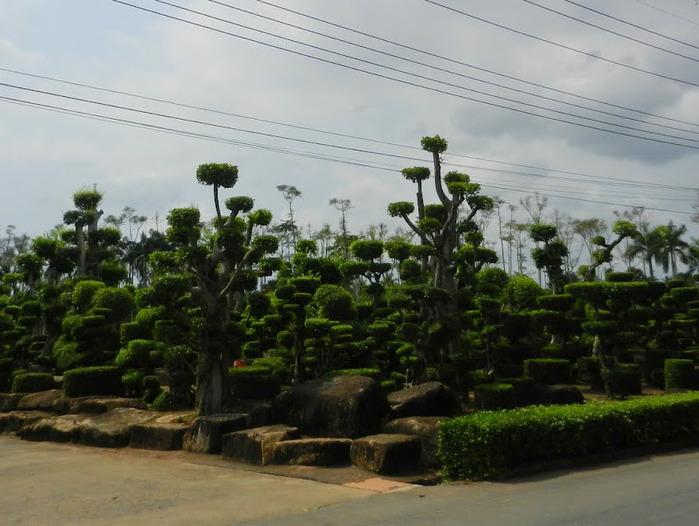 Парк Нонг Нуч (Nong Nooch Tropical Garden) 28629