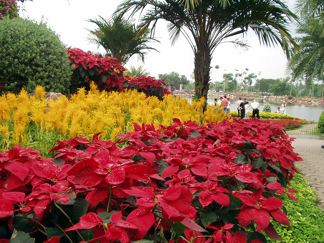 Парк Нонг Нуч (Nong Nooch Tropical Garden) 69196