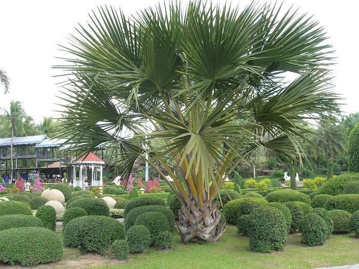 Парк Нонг Нуч (Nong Nooch Tropical Garden) 33684