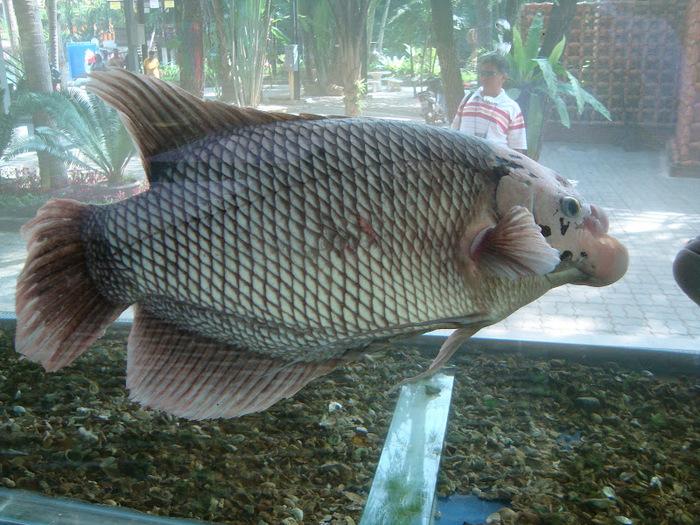 Парк Нонг Нуч (Nong Nooch Tropical Garden) 84388