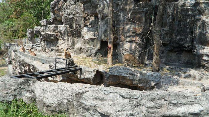 Парк Нонг Нуч (Nong Nooch Tropical Garden) 24504