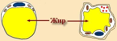 jirovaya-kletka (387x137, 15Kb)