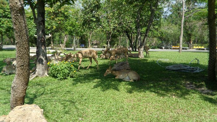 Парк Нонг Нуч (Nong Nooch Tropical Garden) 82855