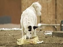 Массовое отравление собак в Новосибирске