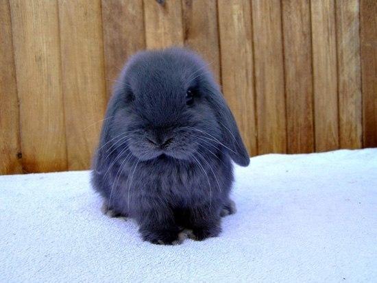 кролик (550x413, 46Kb)