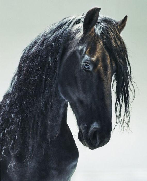 лошадь чёрн.!!! Глаза (570x700, 59Kb)