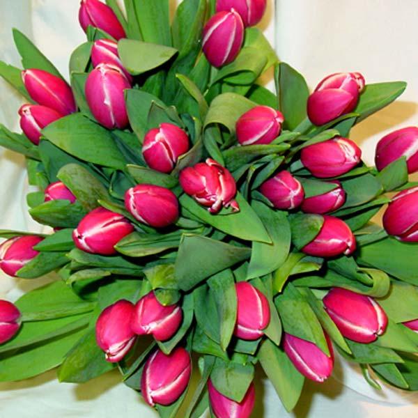 tulip4_l_enl (600x600, 58Kb)