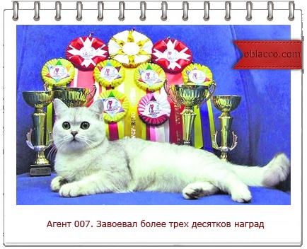 самые знаменитые коты Украины