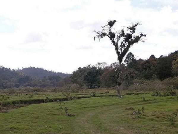 Гватемала - прекрасная страна великих Майя 17 (600x450, 61Kb)