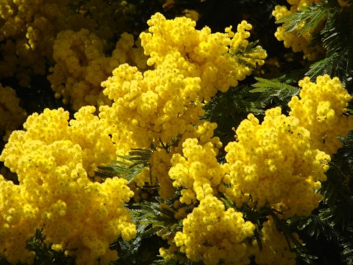 Желтые цветы картинки 7