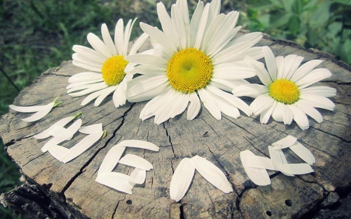 Красивые картинки цветы с надписями 1