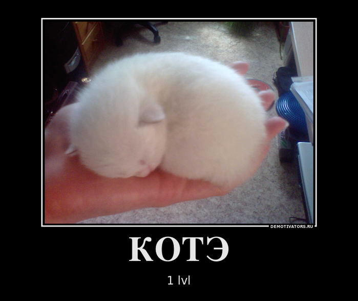 444325_kote_demotivators_ru (700x587, 273Kb)