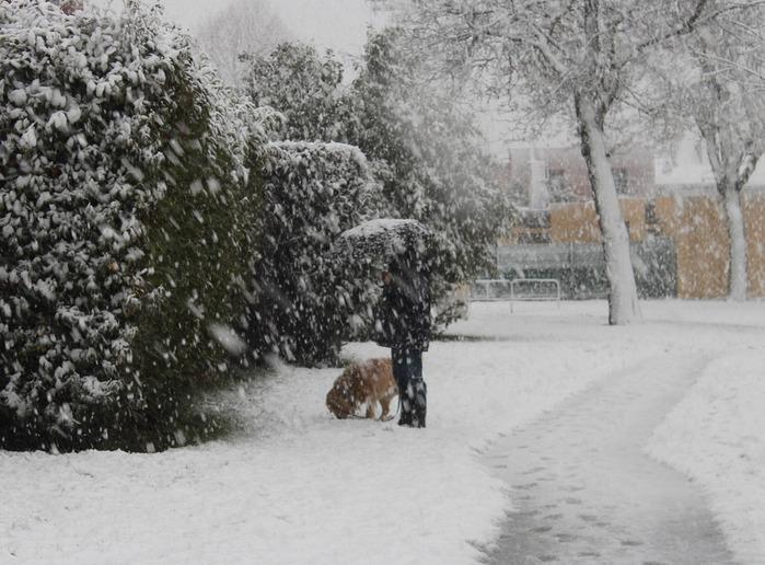 dog snow (700x516, 138Kb)