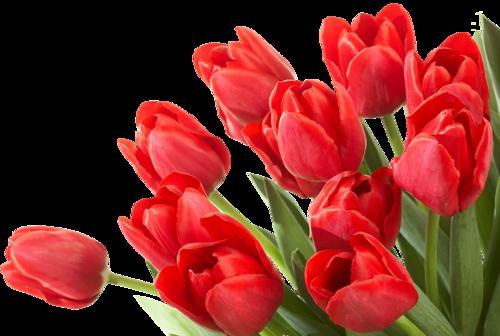 красные тюльпаны_L (500x336, 226Kb)