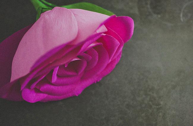 diy-giant-paper-rose-16 (650x425, 43Kb)