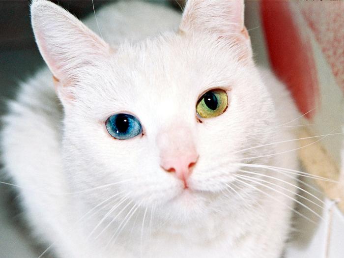 Cat_Eyes (700x525, 428Kb)