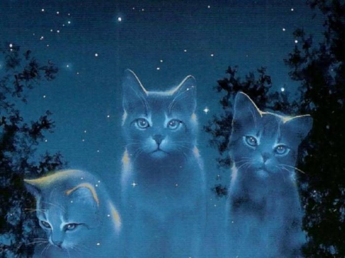 Cats-Wallpaper-cats-9997260-1024-768 (700x525, 40Kb)