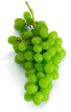 vinograd (245x382, 25Kb)